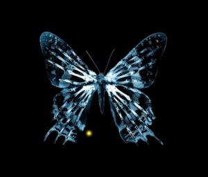 Time management tips the butterfly effect